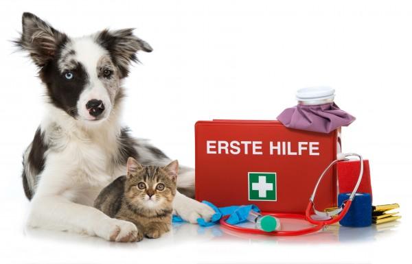 Erste Hilfe bei Hund & Katze mit Casper Teil 1-4
