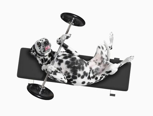 """BARF-Plan Hund """"OVERWEIGHT"""" bei Übergewicht"""